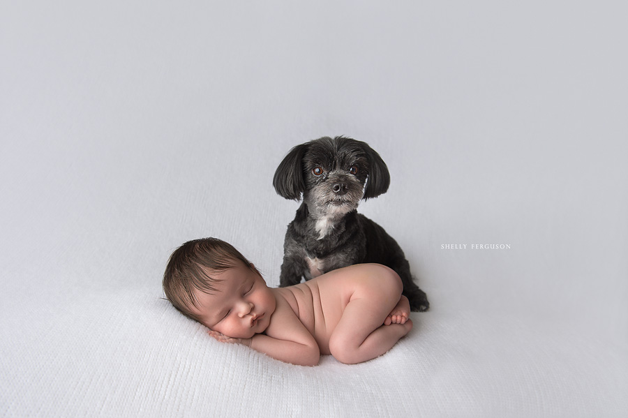 I choose to shoot my dog and newborn images in my studio as opposed style imagery